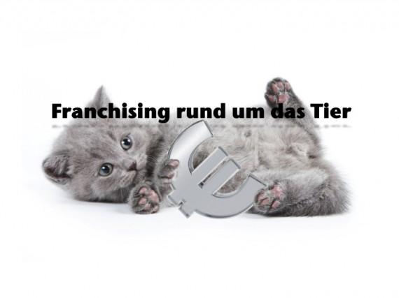 Bild Katze mit Euro