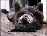Alter Hund - Demenz bei Hunden